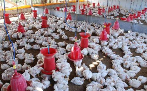 Poultry-Farming